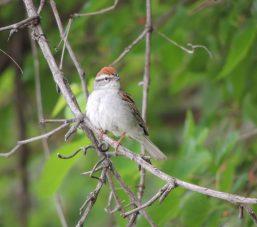 July 2 Nature Walk Bird C