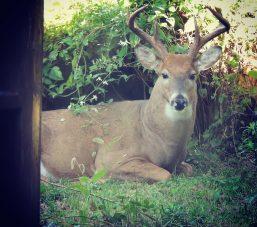 Buck Backyard Best Smaller