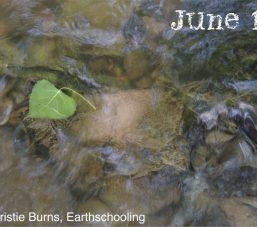 June 12 LY9