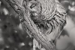 YES-Owl-2