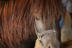 Small-Pony