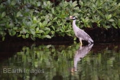 Sanibel Heron 22