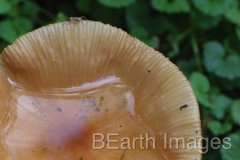 Fungi10WB
