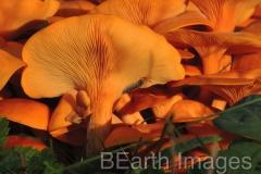 Fungi11WB
