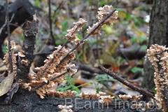 Fungi13WB