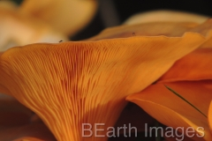 Fungi17WB