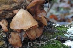 Fungi1WB