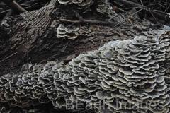 Fungi2WB