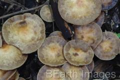 Fungi7WB
