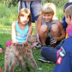 Kindergarten & First Grade Wildlife Curriculum Block