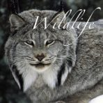 Add-on: Wildlife Curriculum: SINGLE PERSON/FAMILY