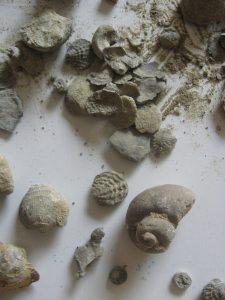Devonian2