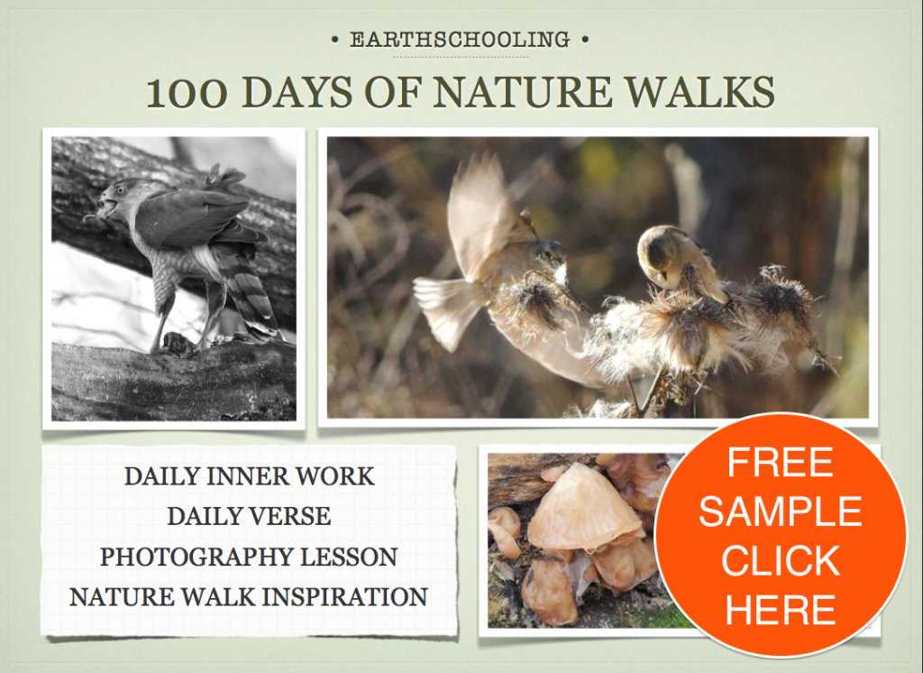 FREE SAMPLE of 100 Days of Nature Walks