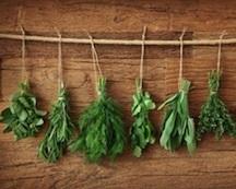 Herbal Harvesting, Wildcrafting and Preparations