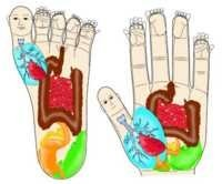 Su-Jok Reflexology for Children and Adults