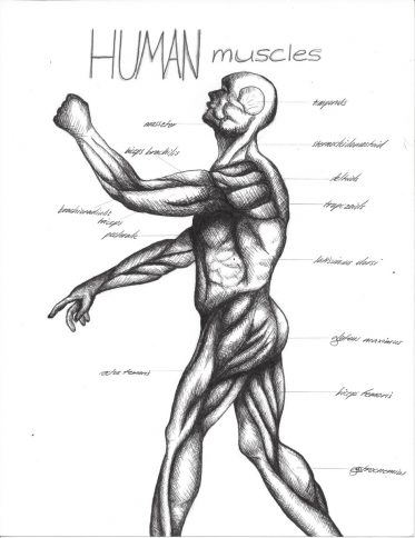 Anatomy and Cross-Hatching