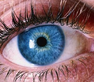 Iridology Course Add-on: CO-OP PRICE