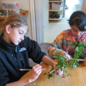 Fifth Grade Waldorf Earthschooling Curriculum For Classrooms, Schools, Co-ops and Charter Schools