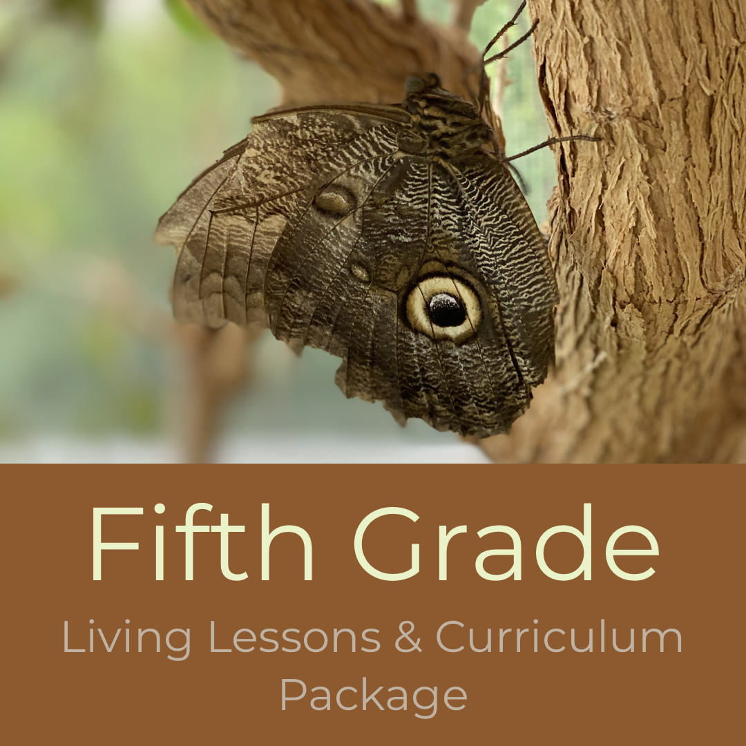 Fifth Grade Waldorf Living Lessons Curriculum Package