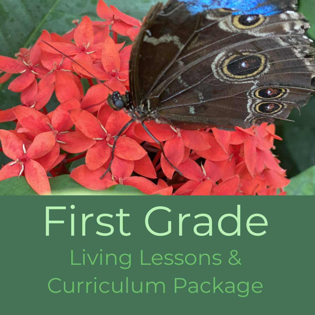 First Grade Waldorf Living Lessons Curriculum
