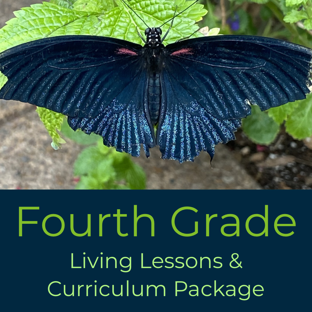 Fourth Grade Waldorf Living Lessons Curriculum Package