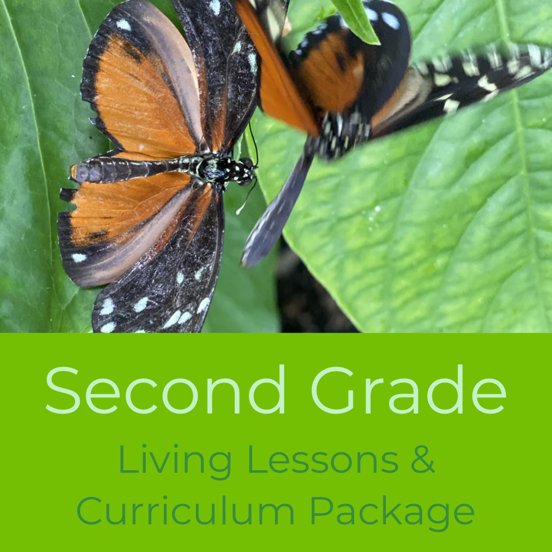 Second Grade Waldorf Living Lessons Curriculum Package
