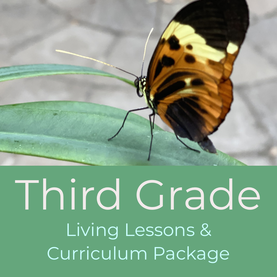 Third Grade Waldorf Living Lessons Curriculum Package